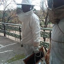abelles urbanes