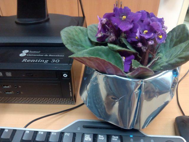 Flors a l