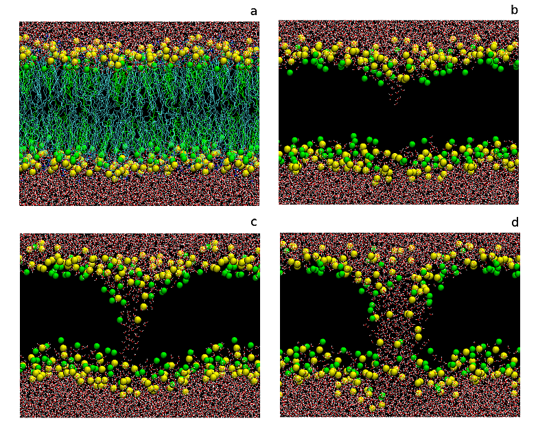 Pore electroformation in a lipid bilayer