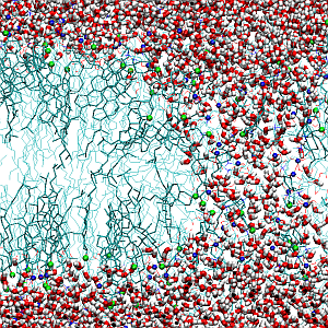 Molecular Dynamics of Biomembranes