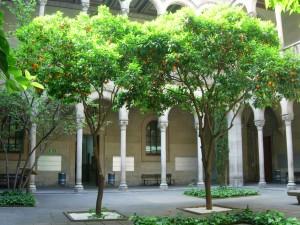 Taronger agre (Citrus aurantium var. amara)