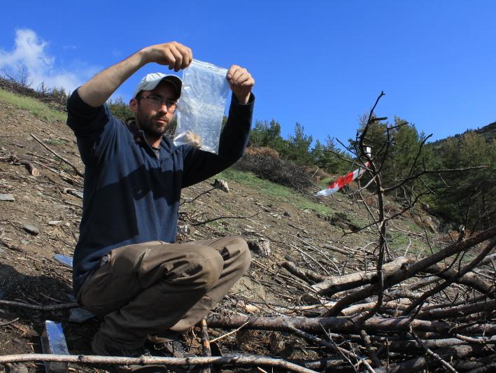 Un investigador de l'EBC-UB realitzant un seguiment de micromamífers. Foto: Roger Puig-Gironès (EBC-UB).