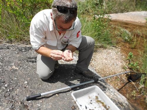Un guarda del Parc Natural de Sant Llorenç del Munt i l'Obac realitzant un seguiment d'invertebrats. Foto: Vicenç Bros (PNSLL).