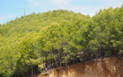 L'Equip participa en els seguiments ecològics realitzats després d'aclarides en pinedes de pi blanc
