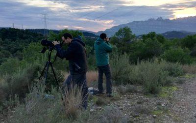 Gran èxit en el cens de rapinyaires nocturns al Parc Natural de Sant Llorenç del Munt i l'Obac