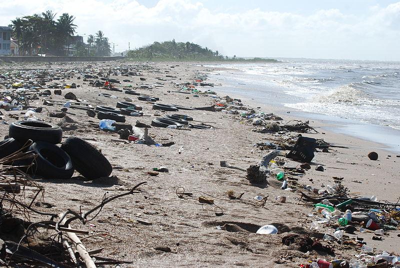 Brossa a la costa de Guyana.