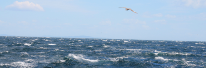 Mar seagull - Master of Oceanography and Marine Environment Management - Faculty of Biology - University of Barcelona