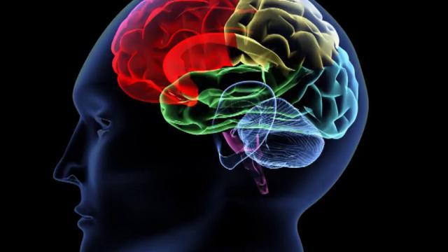 Nou descobriment sobre la tija encefàlica