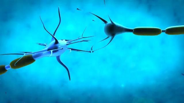 NeuroConcerts: El cervell vibra amb la música