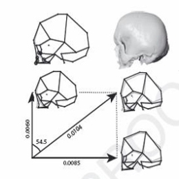 The study examines the three-dimensional coordinates of 29 anatomical 'landmarks' in the human skull.
