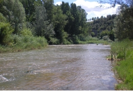 In the Catalan river system, there are also some parts where high levels of salinity can be found. (Image: the Llobregat river in Navarcles / FEM Research Group-UB)
