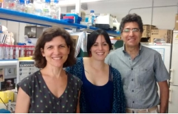 From left to right, researchers Teresa Adell, María Almuedo-Castillo and Emili Saló.