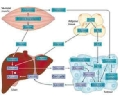 The article emphasizes the importance of studying the basis of the mechanisms that produce cancer cachexia, and the role that different cell types play to turn the disease into a multi-organ syndrome. Figure: Nature Reviews- Cachexia is a multi-organ syndrome according to an article of 'Nature Reviews in Cancer'