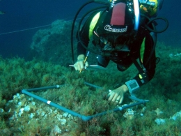 Researchers have applied a common protocol to study thirteen different worldwide rocky reef systems.