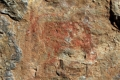 A goat, one of the twenty-one motifs discovered. - Discovered some 7,000 year old rock paintings in Portell de Morella