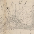 Detailed view of a drawing of the cerebral cortex included in the work <i>Sur la structure de l'écorce cérébrale de quelques mammifères</i> (Aug. Peeters, Lovaina, 1891).   - Santiago Ramón y Cajal&amp;rsquo;s work available to everyone