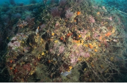 Long lines and hooks may also produce severe damages to benthos when they become fouled in sessile organisms (gorgonians, coral, algae, etc.).