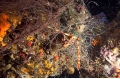 "Lost fishing gear are real ""ghost nets"" that continue catching organisms for many months without any type of profit for fisheries.- Objective: to remove lost fishing nets to protect the seabed"