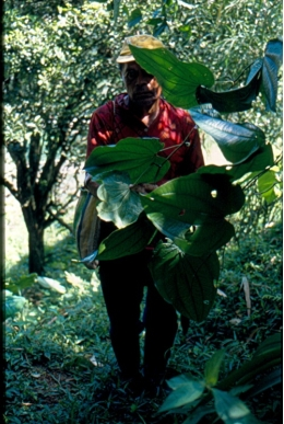 Ethnobotany studies the relation between human populations and their plant environment.
