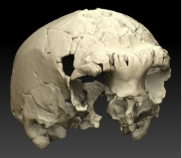 The Aroeira cranium is an important contribution to the knowledge of human evolution in Europe's Middle Pleistocene and the origins of the Neanderthal peoples.