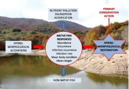 For the first time, a research study analyses whether the presence of exotic fish in Mediterranean rivers affects the response of native fish in presence of environmental pollution.