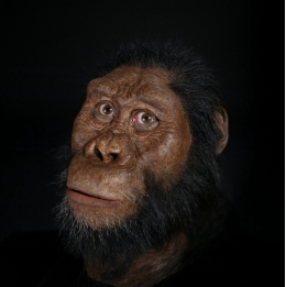 Researchers found cranial and facial characteristics that had not been observed before and has been possible to make a face reconstruction. Credit:  John Gurche / Matt Crow, CMNH