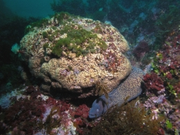 According to the authors, some coral colonies that were considered lost years ago show some living parts.