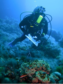 Since 2002, Diego Kersting and Cristina Linares have been monitoring 250 coral colonies in the marine reserve in Columbrets.