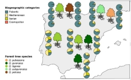 The new study focuses on the study of spider communities in the national parks of Aigüestortes i Estany de Sant Maurici, Ordesa y Monte Perdido, Picos de Europa, Monfragüe, Cabañeros and Sierra Nevada.