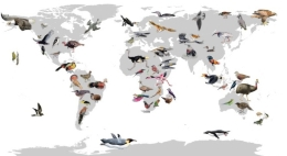 The study presents 257 new bird genomes that expand the sequenced genetic material during the first phase and expand the sequenced genetic material and shed light on the evolution of the genomic diversity among bird lineages.
