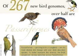 Passeriform birds –the order with the highest number of bird species– show the genomic features that differ from other bird groups.